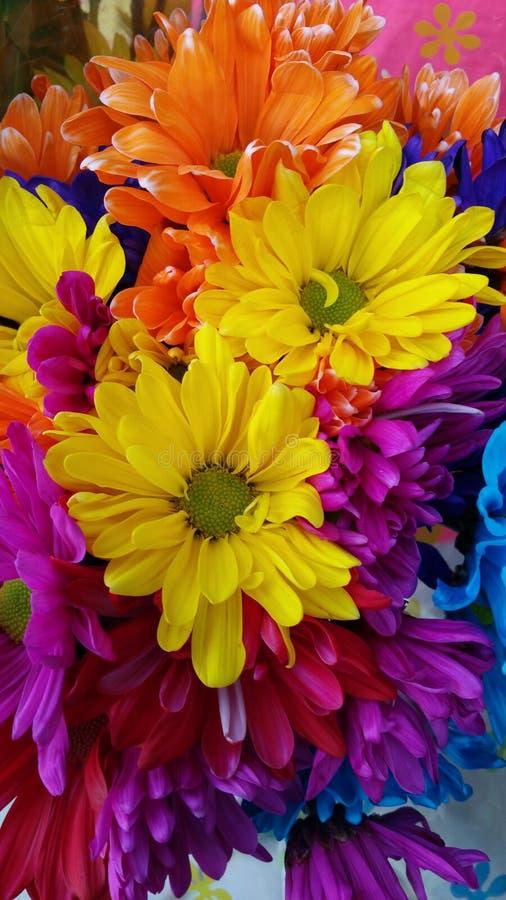 Fleurs colorées photos libres de droits