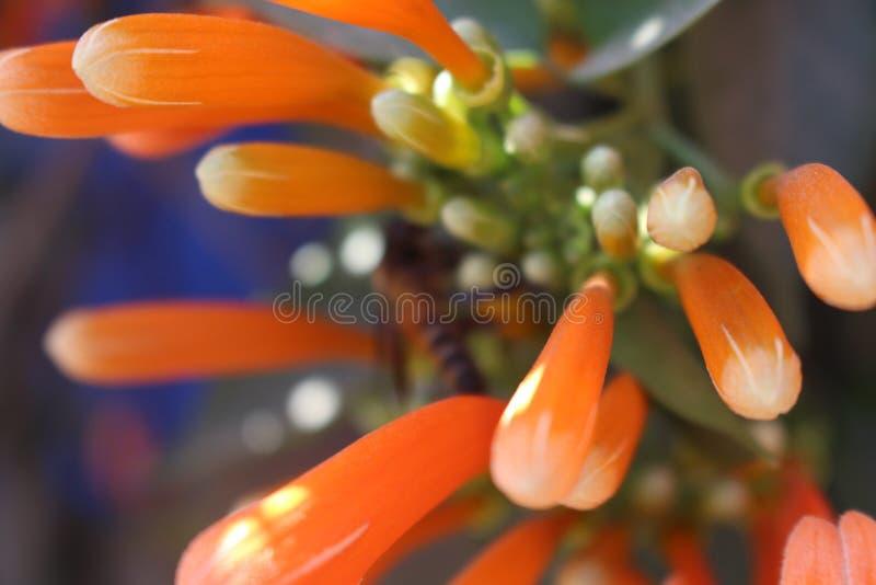 Fleurs colorées images stock