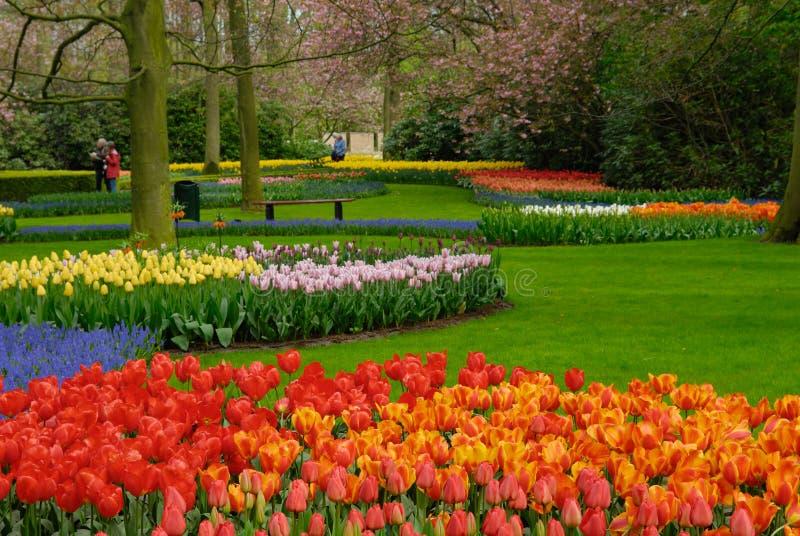 Fleurs colorées au printemps photo libre de droits
