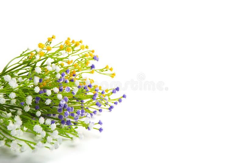 Fleurs colorées d'isolement sur le fond blanc images stock