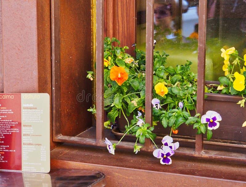 Fleurs colorées dans la fenêtre de restaurant, Toledo, Espagne images stock