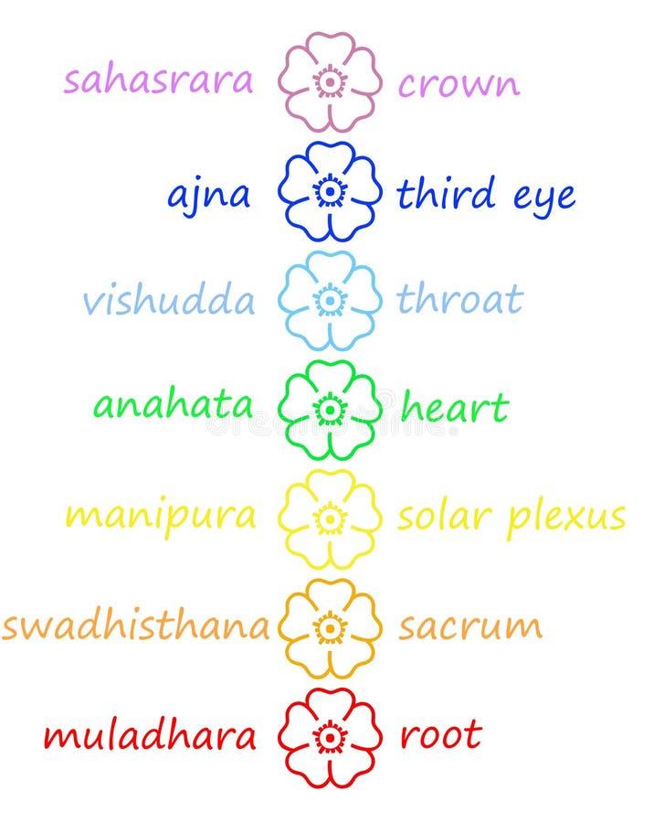Fleurs colorées dans le fléau de chakra illustration de vecteur
