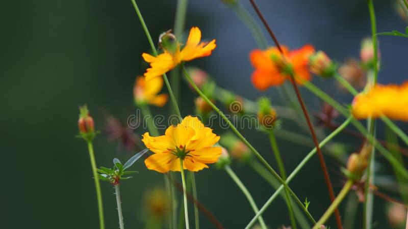 Fleurs colorées dans le jardin d'agrément photographie stock