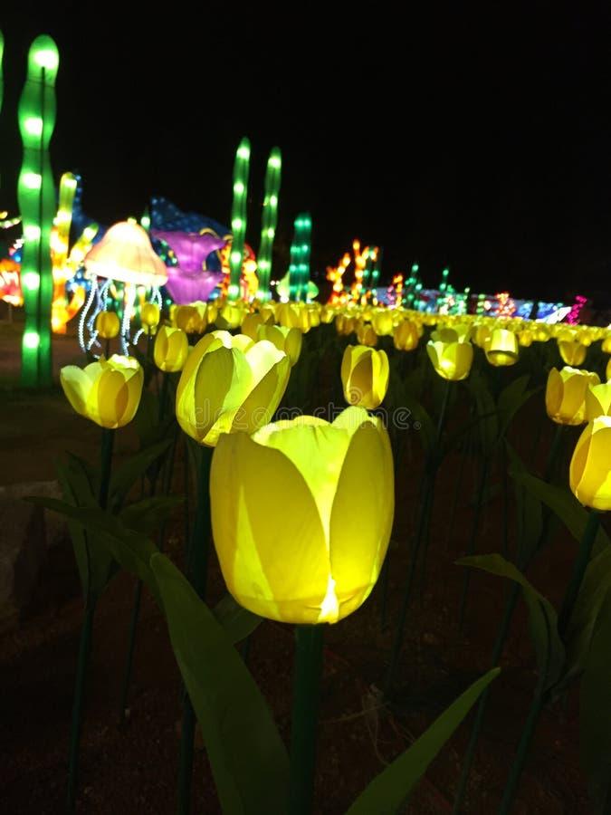Fleurs colorées de clignotement photo stock