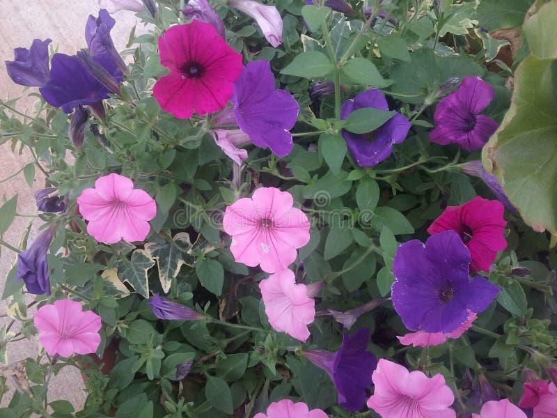 Fleurs colorées du parc photos libres de droits
