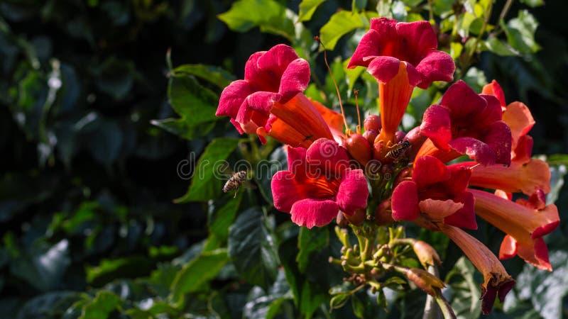 Fleurs colorées par rouge lumineux avec des insectes photographie stock libre de droits