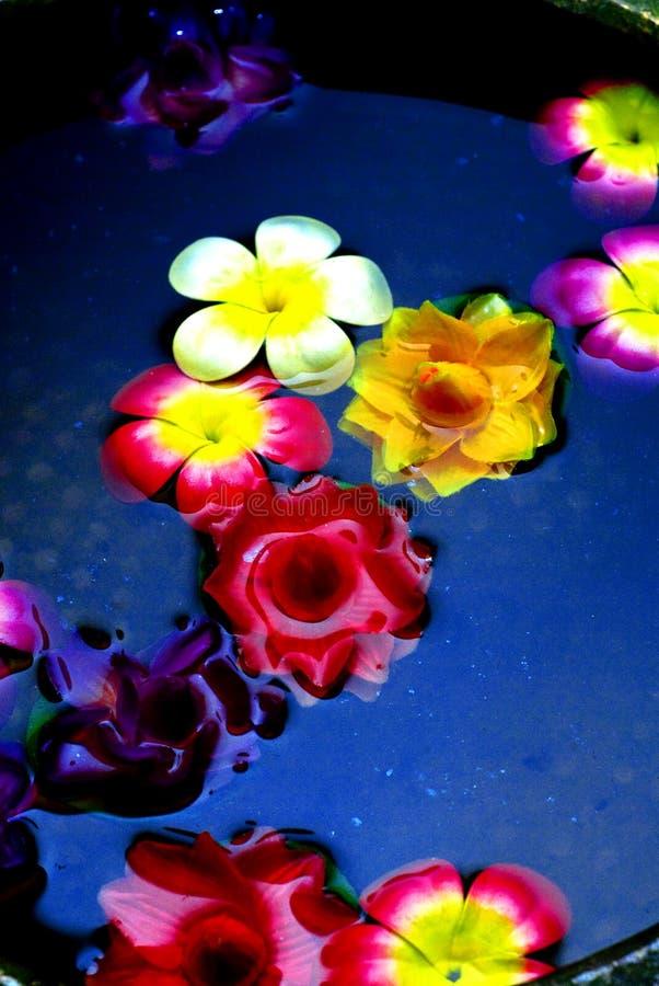 Fleurs colorées sur l'eau photographie stock libre de droits