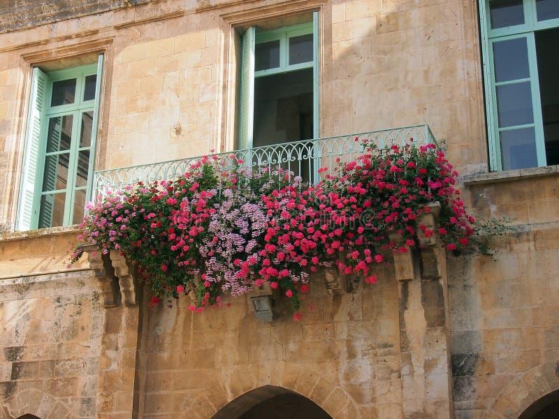 Fleurs colorées sur la Chambre de pierre de Jérusalem, Israël photo stock