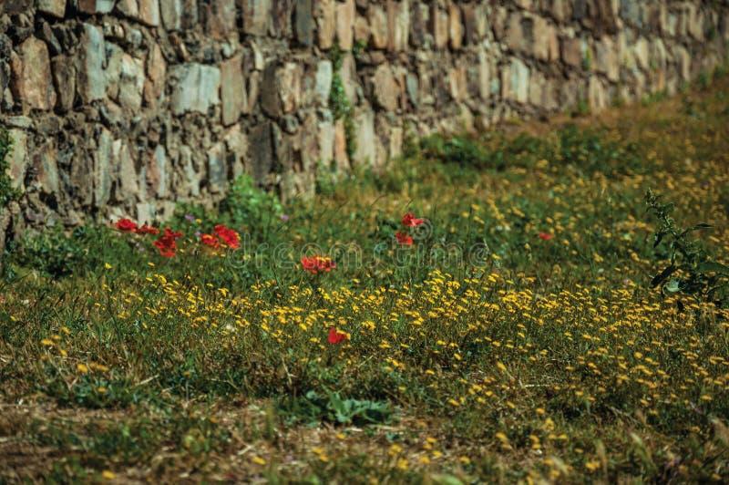 Fleurs colorées sur la pelouse verte à côté du mur en pierre photos stock