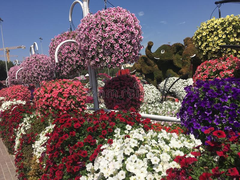 Fleurs color?es photographie stock