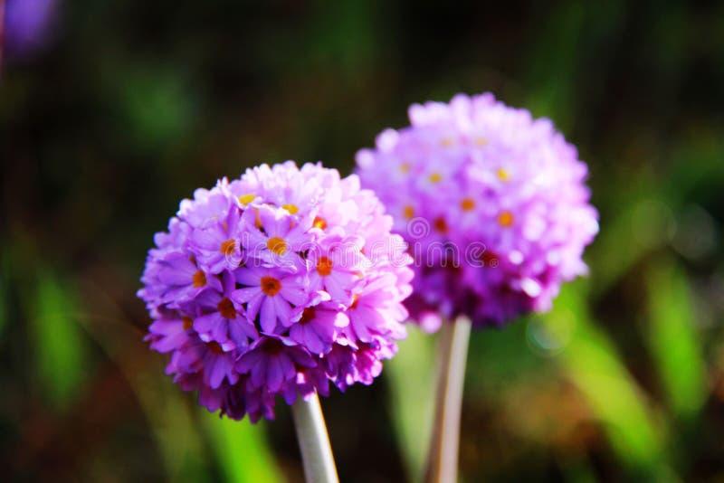 Fleurs comme les femmes, femmes comme des fleurs photos libres de droits