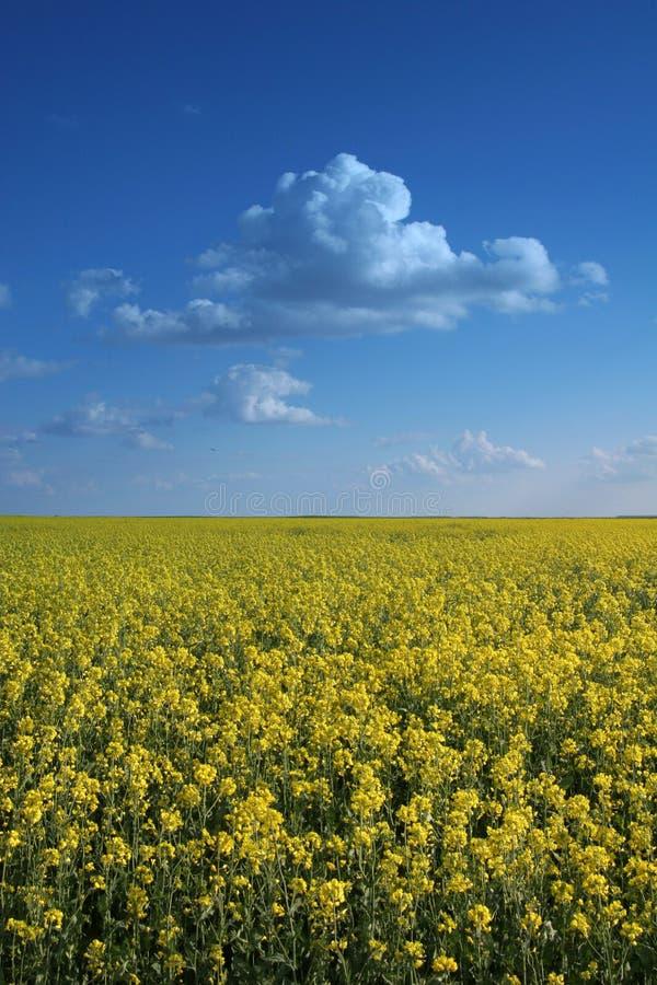 Fleurs contre le ciel photo libre de droits