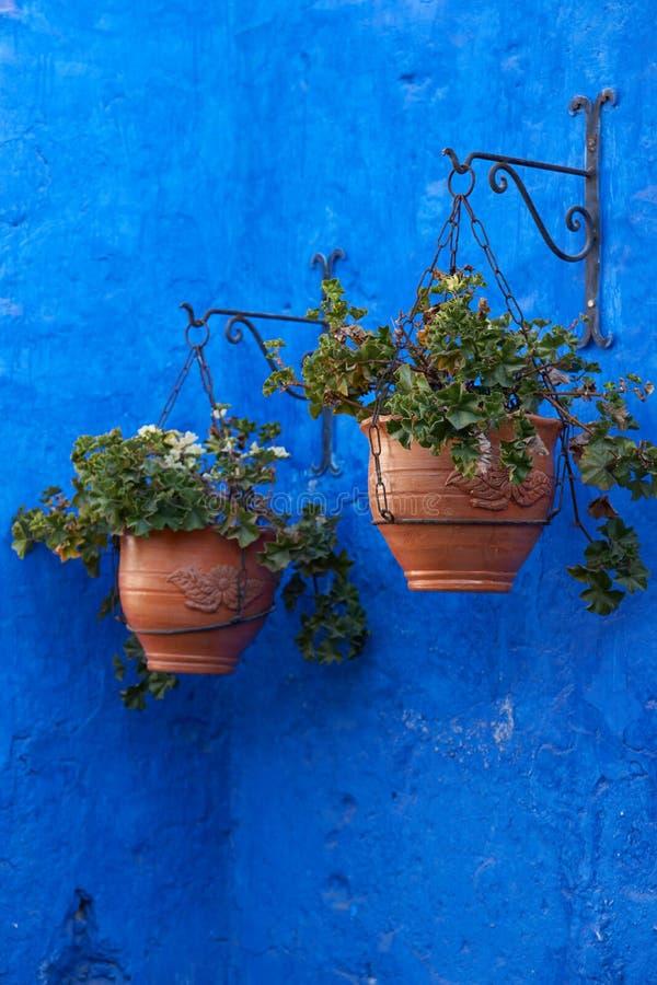 Fleurs contre le mur bleu photo stock