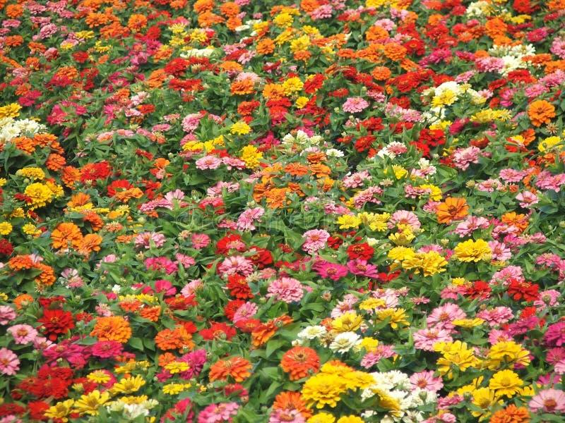 Fleurs - couleurs d'automne images stock