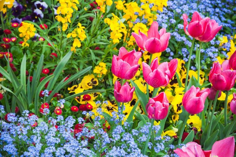 Fleurs décoratives colorées, parterre de jardin photos stock