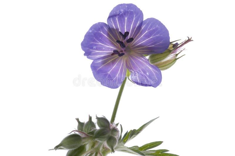 Fleurs décoratives macro photo libre de droits