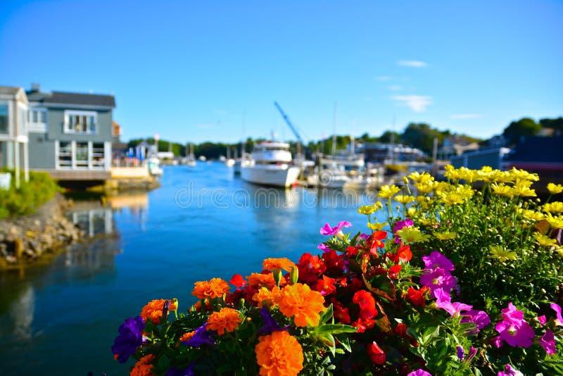 Fleurs d'été à Kennebunkport, Maine images libres de droits
