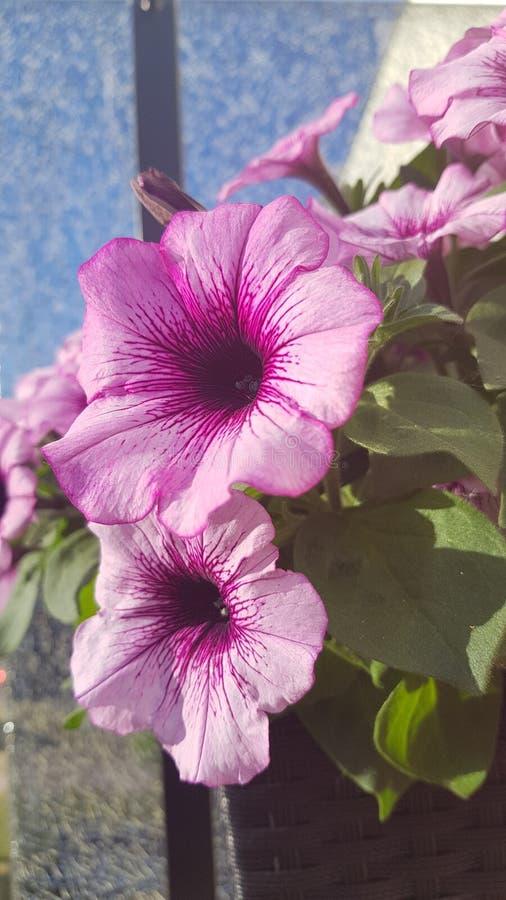 Fleurs d'été photographie stock