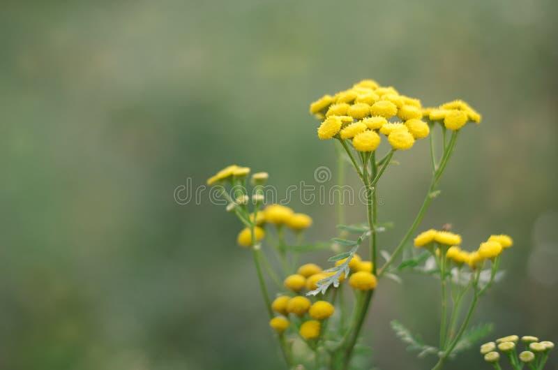 Fleurs 1 d'été photographie stock