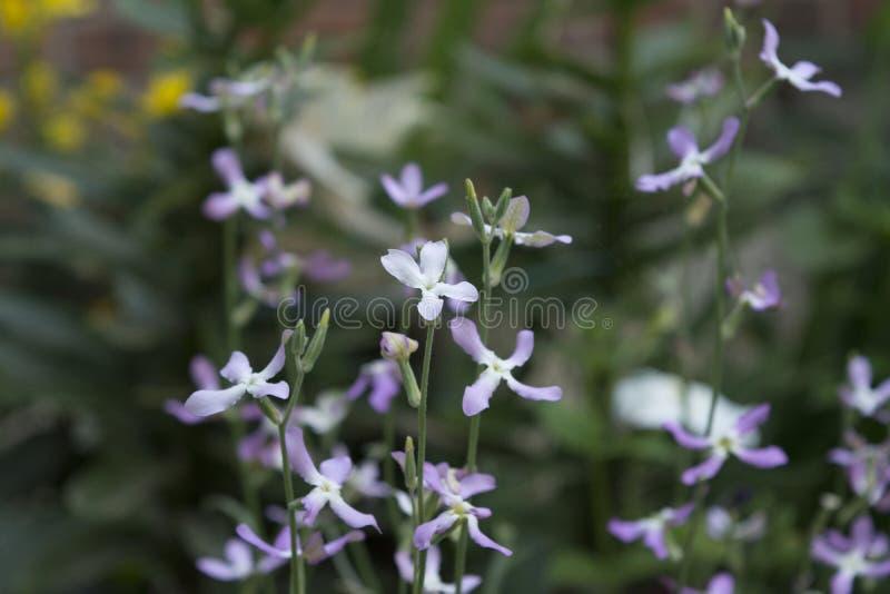 Download Fleurs d'été photo stock. Image du été, course, centrale - 77150856