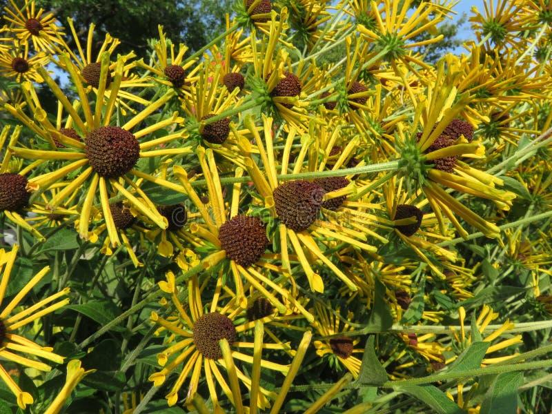 Fleurs d'été d'août photos stock
