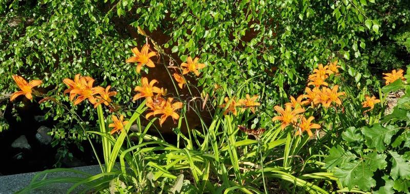 Fleurs d'été brillantes photographie stock