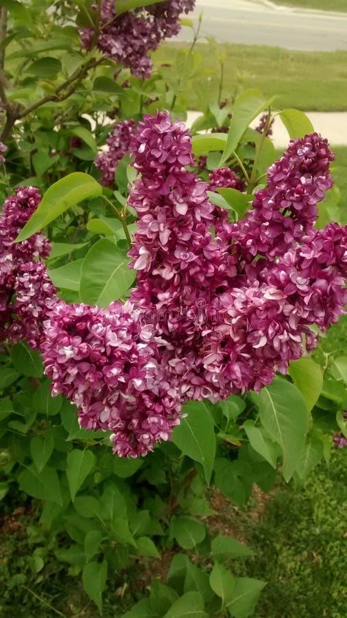 Fleurs d'été en parc images libres de droits