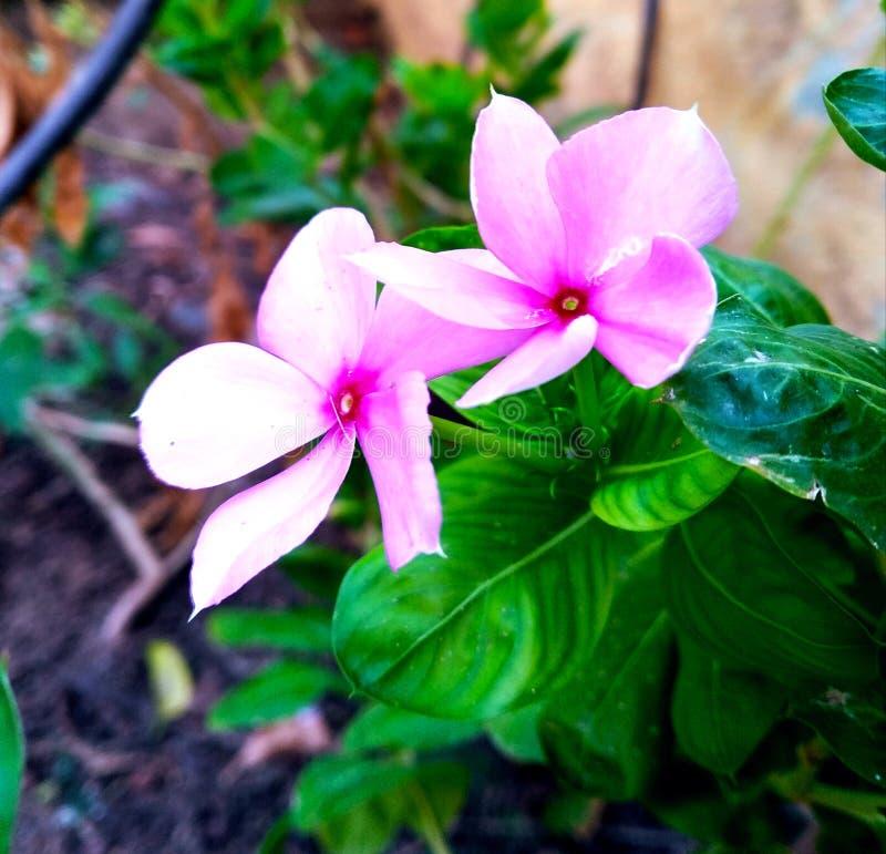 Fleurs d'amour photo stock