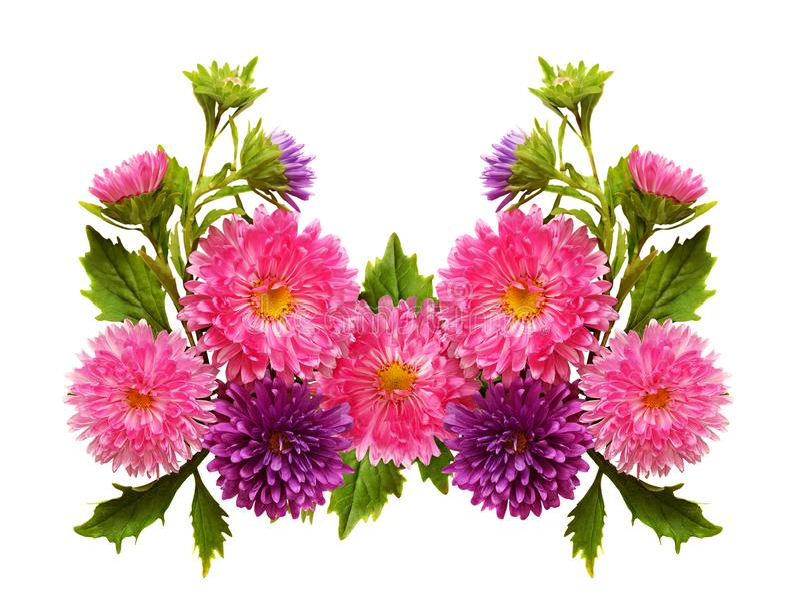Fleurs d'aster dans la disposition images libres de droits