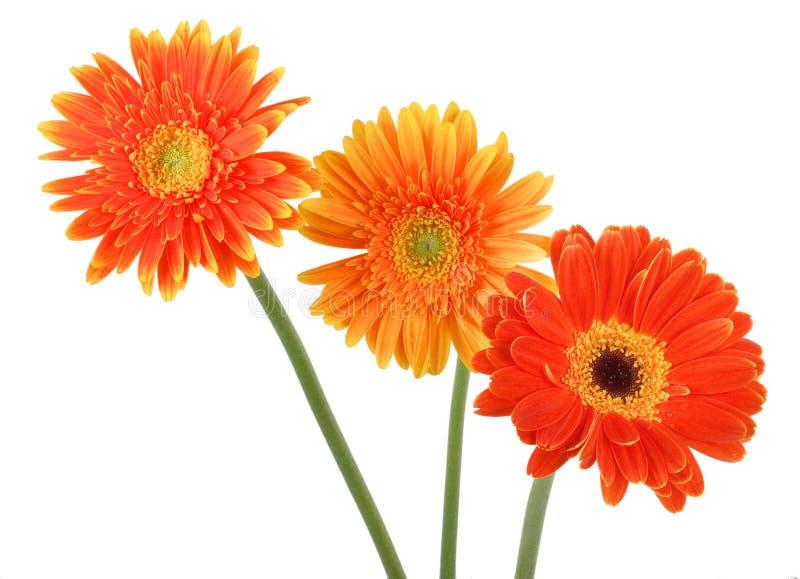 fleurs d'automne photo stock