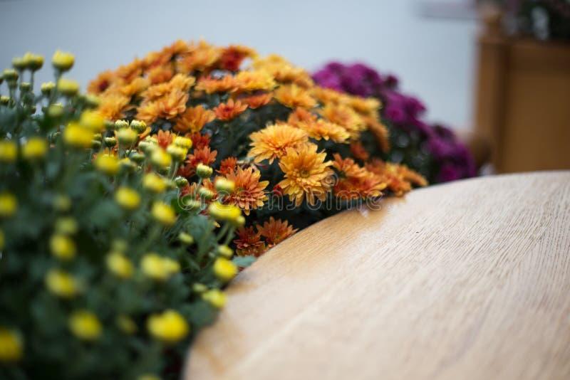 Fleurs d'automne dans le café de rue photo stock