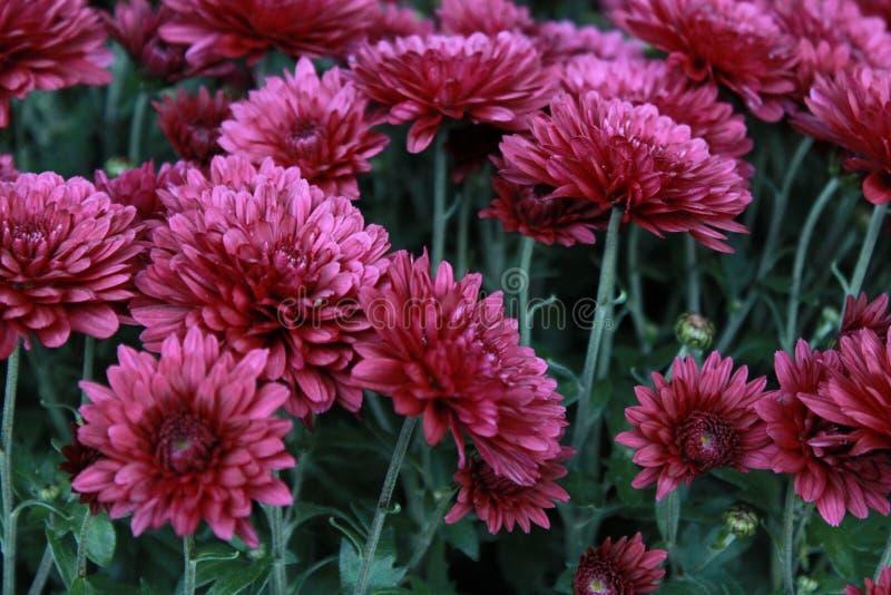 Fleurs d'avril images libres de droits