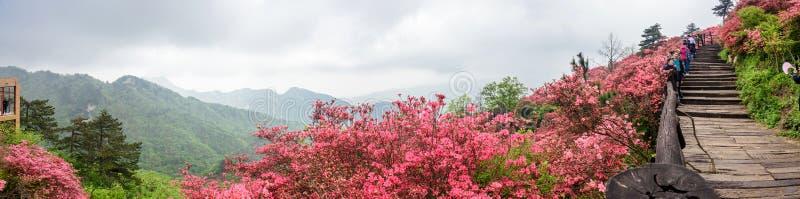 Fleurs d'azal?e photos libres de droits