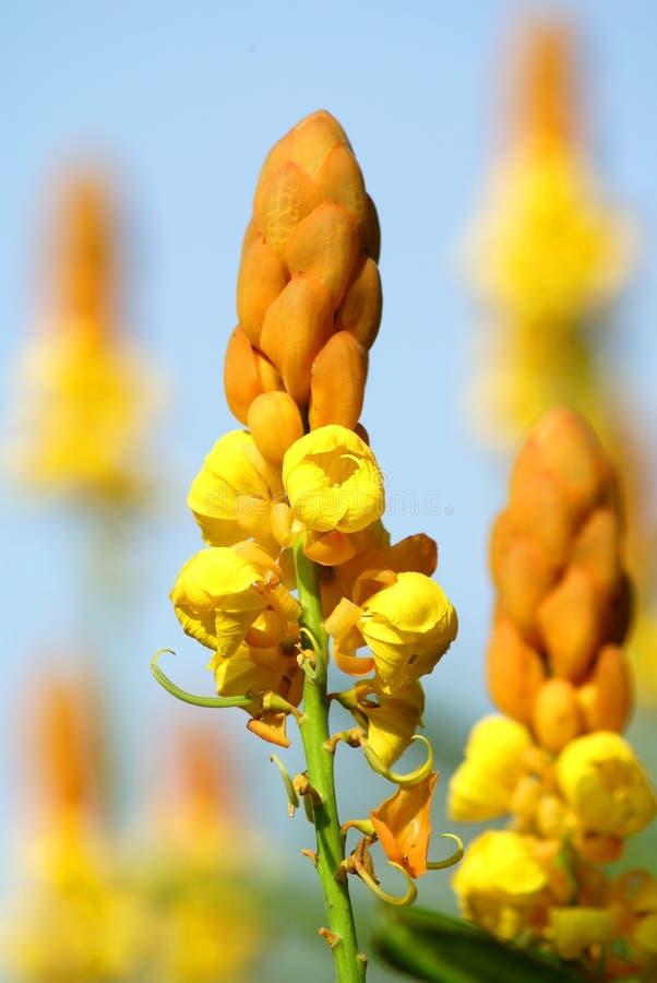 Fleurs d'or de chandeliers photo libre de droits