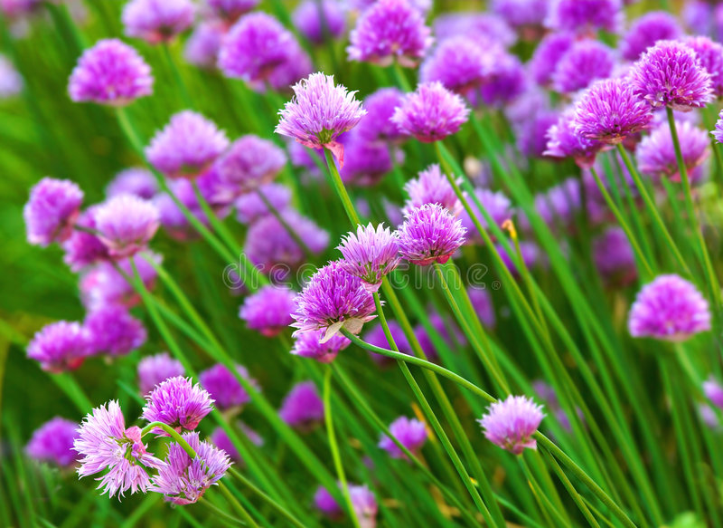 Fleurs d'herbe images stock