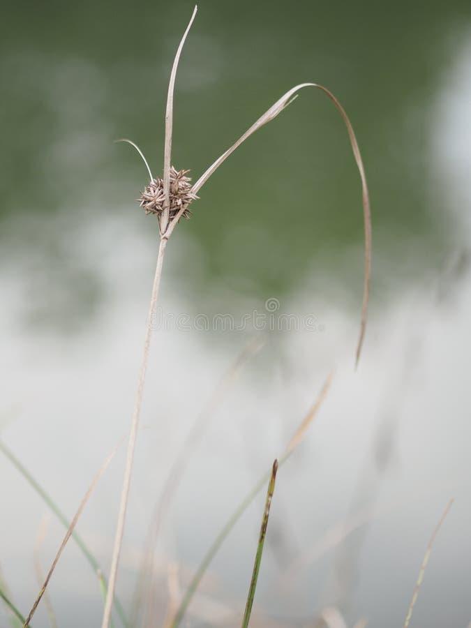 Fleurs d'herbe sèche qui sont sur le tronc image stock
