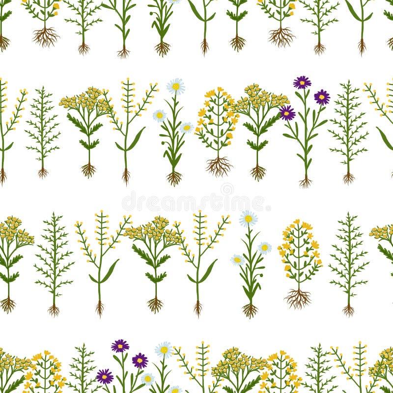 fleurs d 39 herbier avec des racines mod le sans couture illustration de vecteur illustration du. Black Bedroom Furniture Sets. Home Design Ideas
