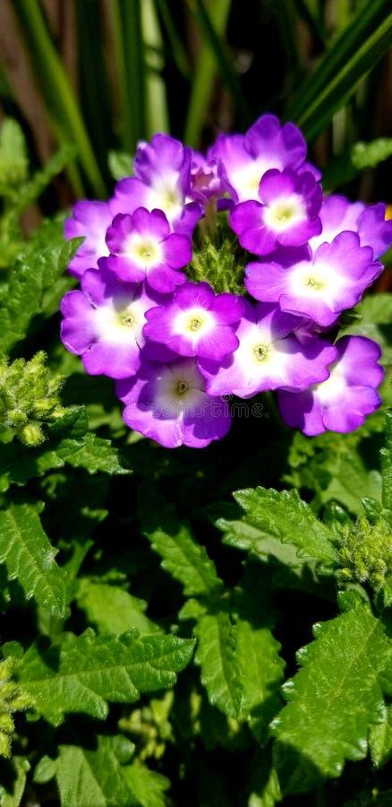 Fleurs d'heure d'été photos libres de droits