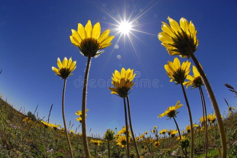 Fleurs d'heure d'été images libres de droits