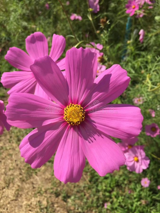 Fleurs d'hiver photo stock