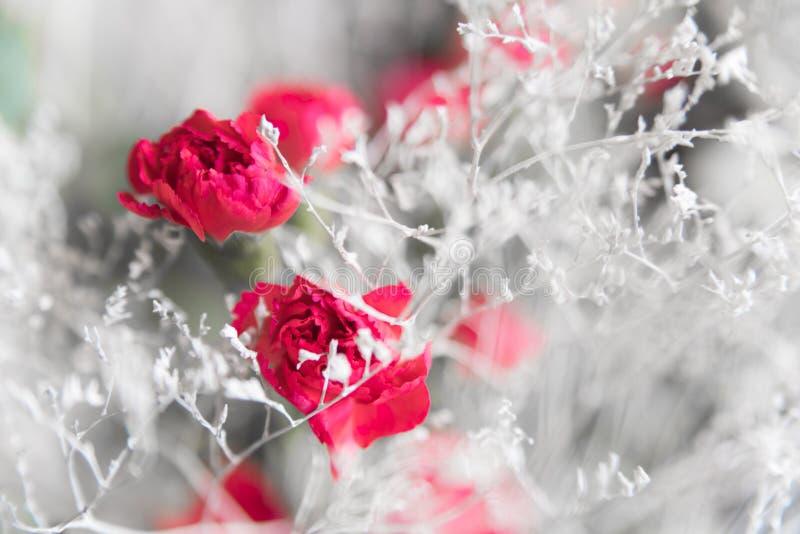 Fleurs d'hiver de carte postale Brindilles élégantes minces blanches comme neige et oeillets rouges photo stock