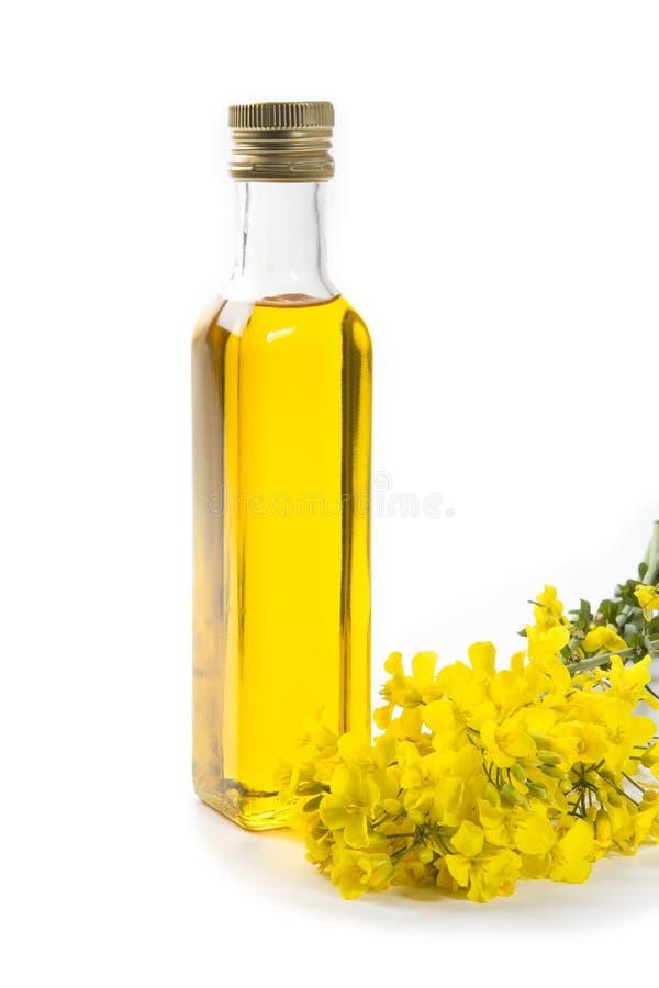 Fleurs d'huile et de graine de colza de Canola photos stock