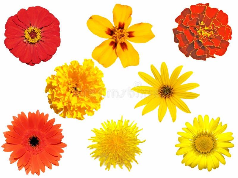 Fleurs d'isolement photo libre de droits