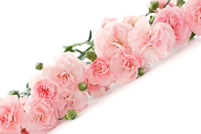 Fleurs d'oeillet photo libre de droits