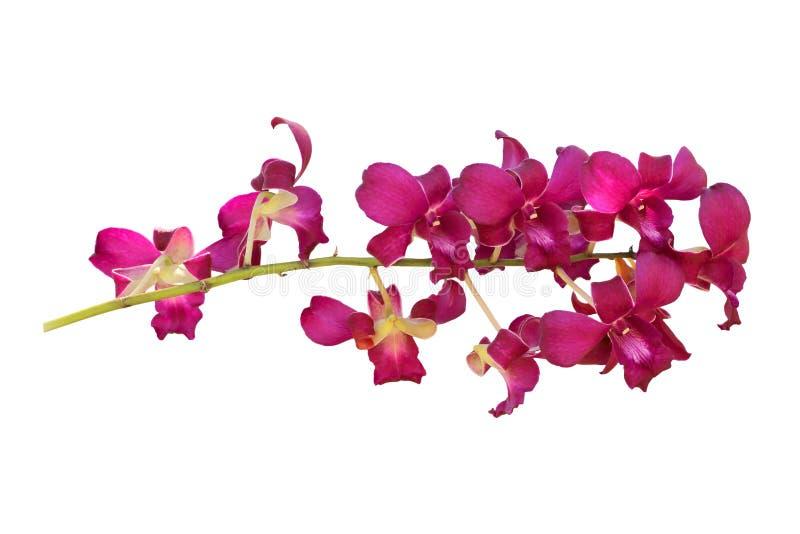 Fleurs d'orchidée d'isolement sur le blanc images stock