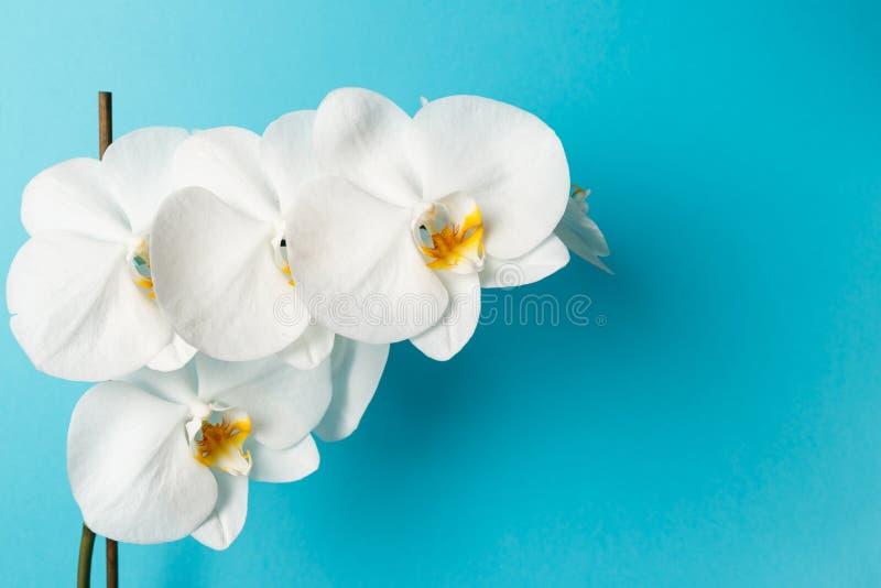 Fleurs d'orchid?e sur le fond bleu photo libre de droits