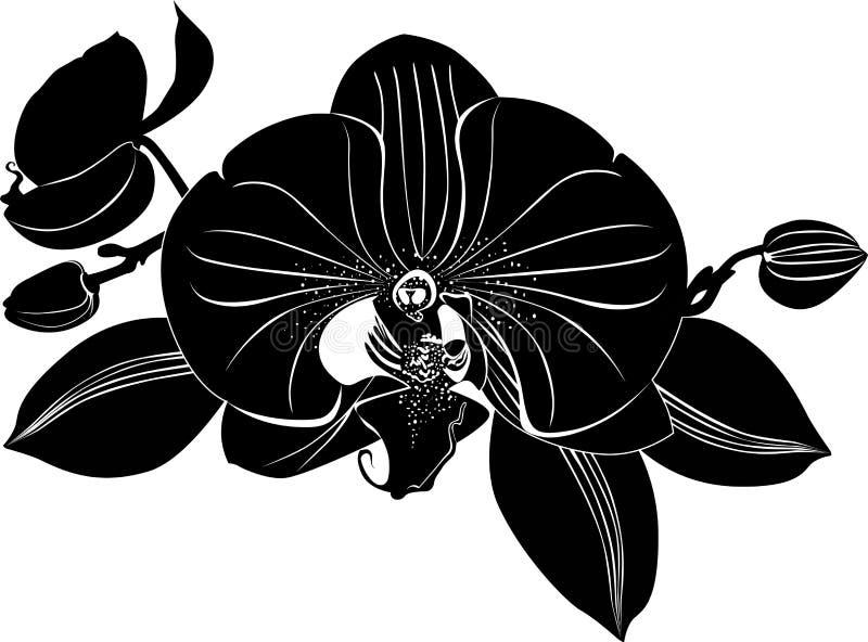 Fleurs d'orchidées illustration de vecteur