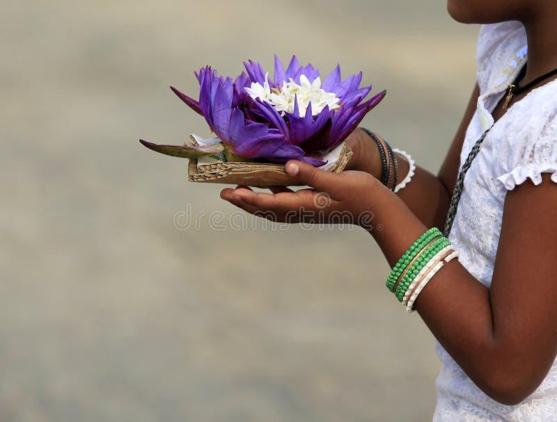 Fleurs d'un lotus dans des mains images stock