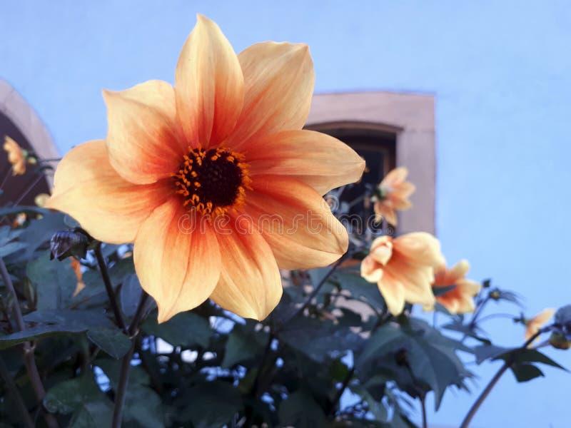 Fleurs dans Alsancia, France images stock