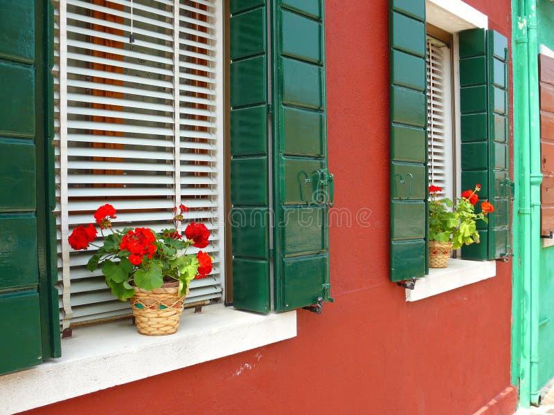 Fleurs dans Burano images libres de droits